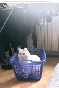 katarina baban mačka