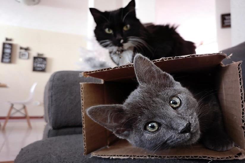 crna maca preuzimanje